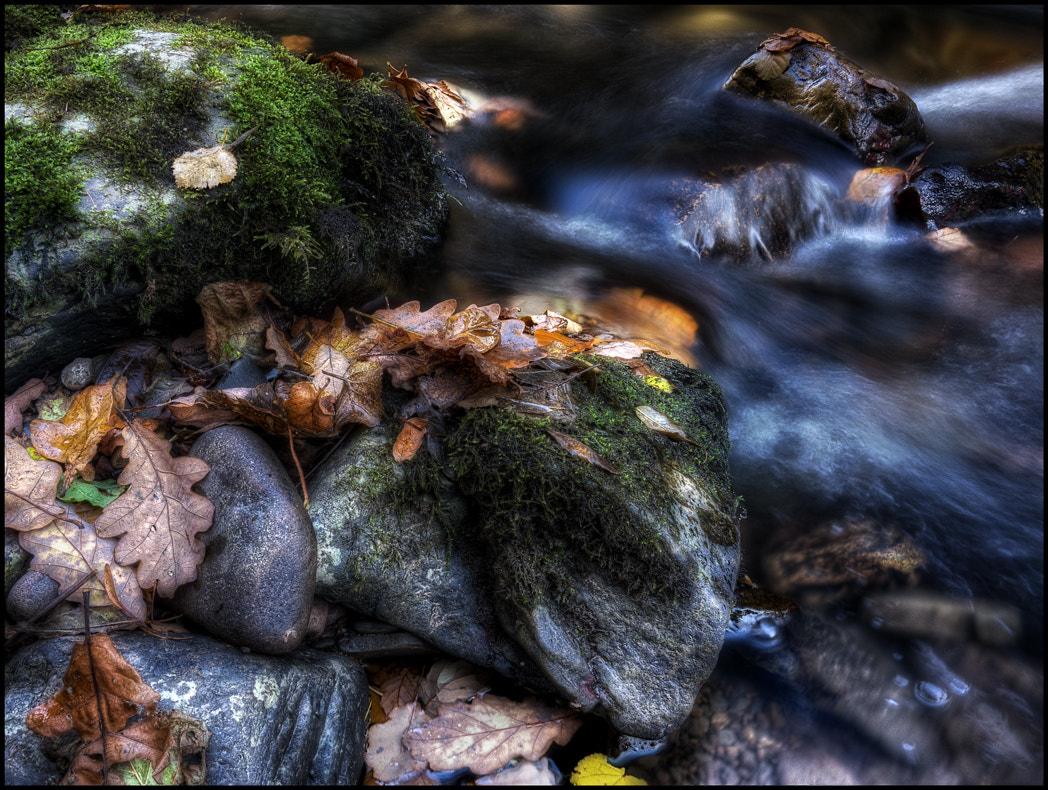 Photograph Rocks and Leaves by Matthew Jones on 500px