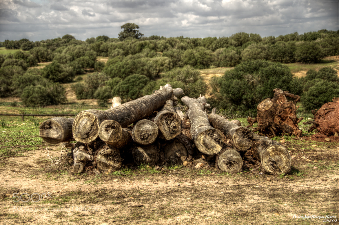 Photograph trunks by Andrés J. Márquez on 500px