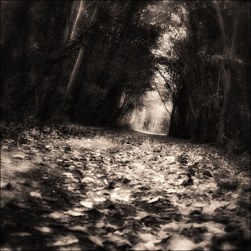 Photograph Lost in a forest by jack kcaj on 500px