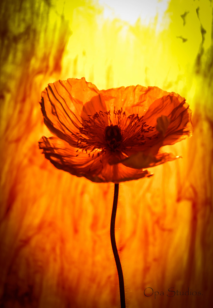 Photograph Paper Flower. by Mario J on 500px