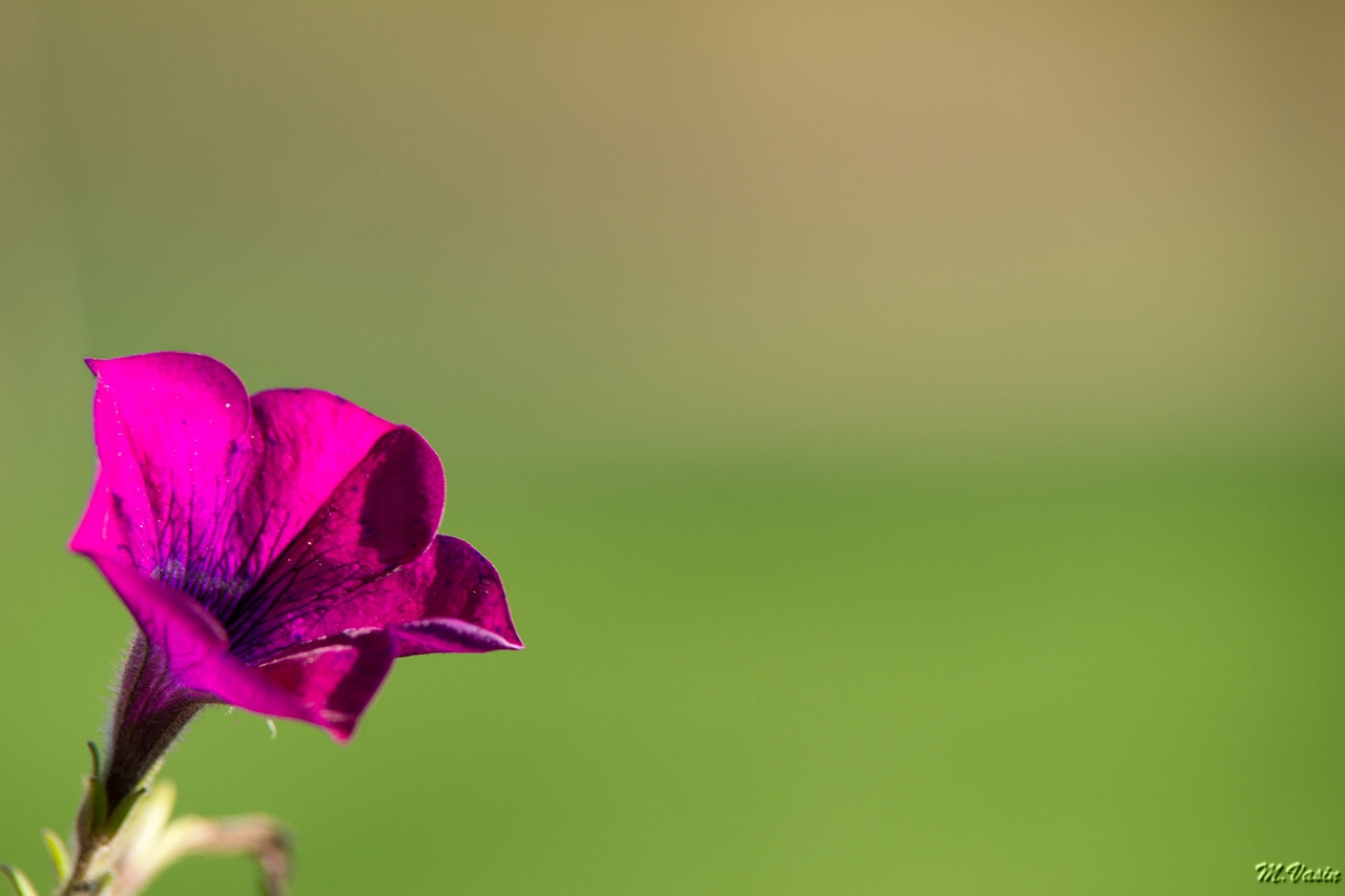 Photograph flower by Michael Vasin on 500px