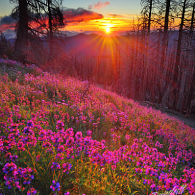 Alpine Sunrise by Gary Randall (GaryRandall)) on 500px.com