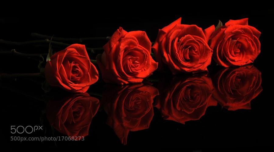Red roses by Cristobal Garciaferro Rubio (CristobalGarciaferroRubio)) on 500px.com