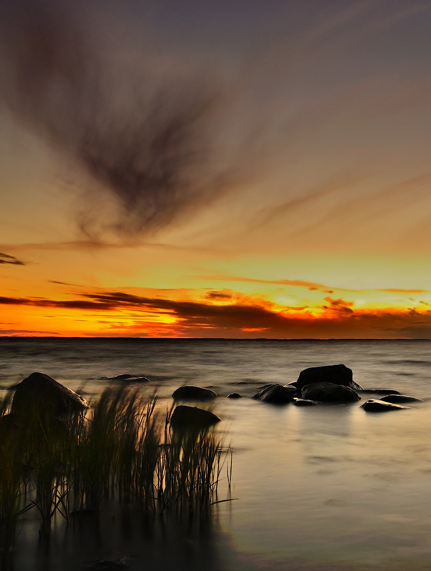 Photograph Reed by Thomas Karlberg on 500px