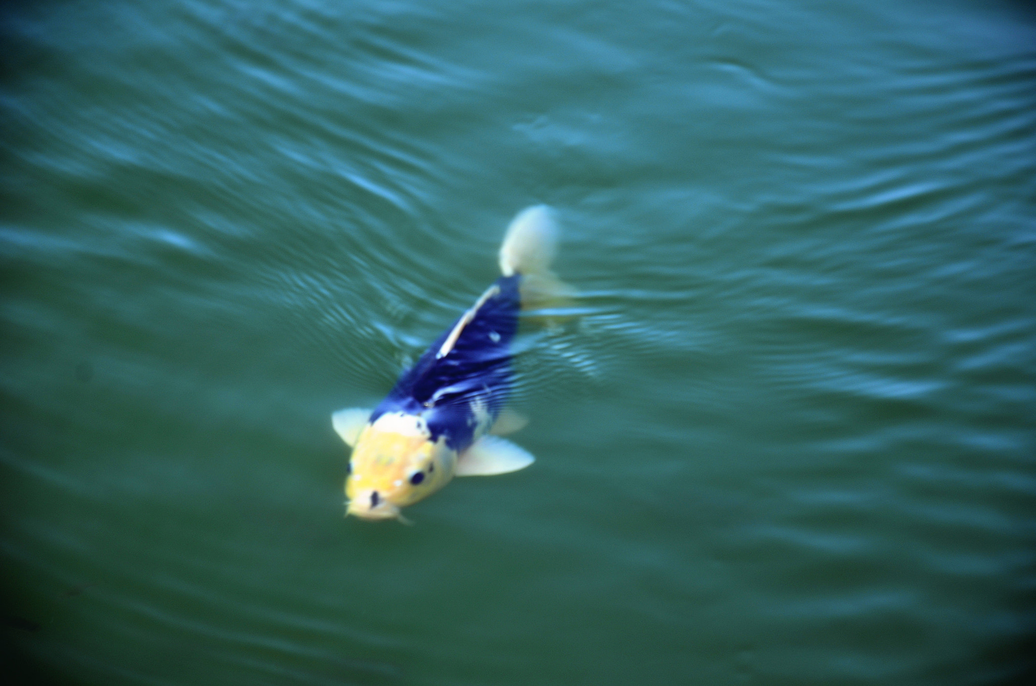 Photograph Enterainment Fish by Claire Hu on 500px