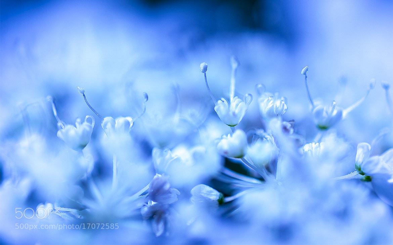 Photograph Blu flower by Salmen Bejaoui on 500px