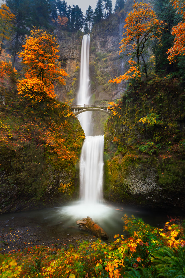 Multnomah Falls in Autumn colors by William Lee on 500px.com