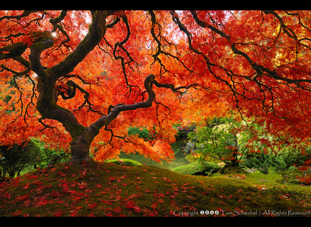 Photograph Japanese Garden by Tom Schwabel on 500px