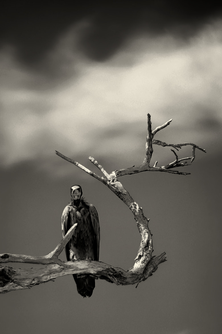 Photograph Waiting for Death by Rishit Temkar on 500px