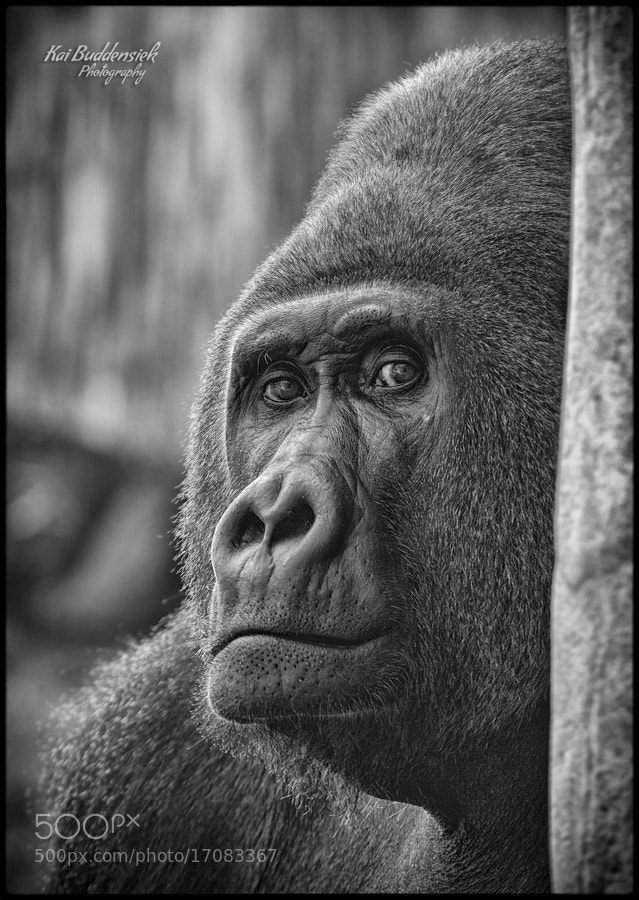 Photograph Look into my eyes by Kai Buddensiek on 500px