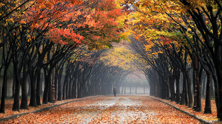 colorful by Tiger Seo on 500px.com