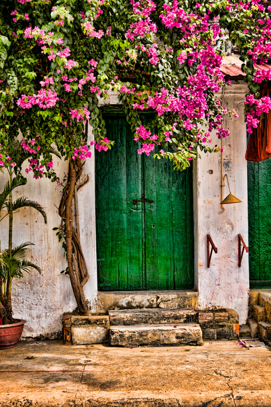 Photograph Bougainvillier door by Michel Latendresse on 500px