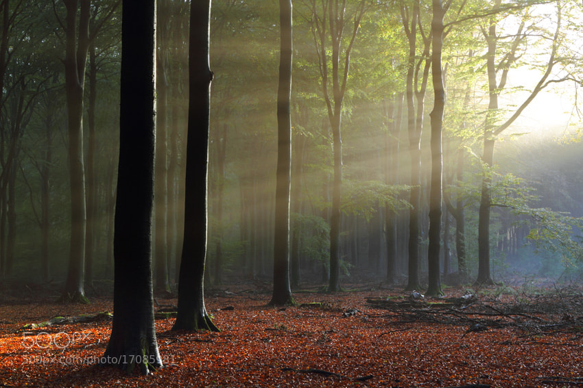 Photograph The forest awakes by Johannes van Donge on 500px
