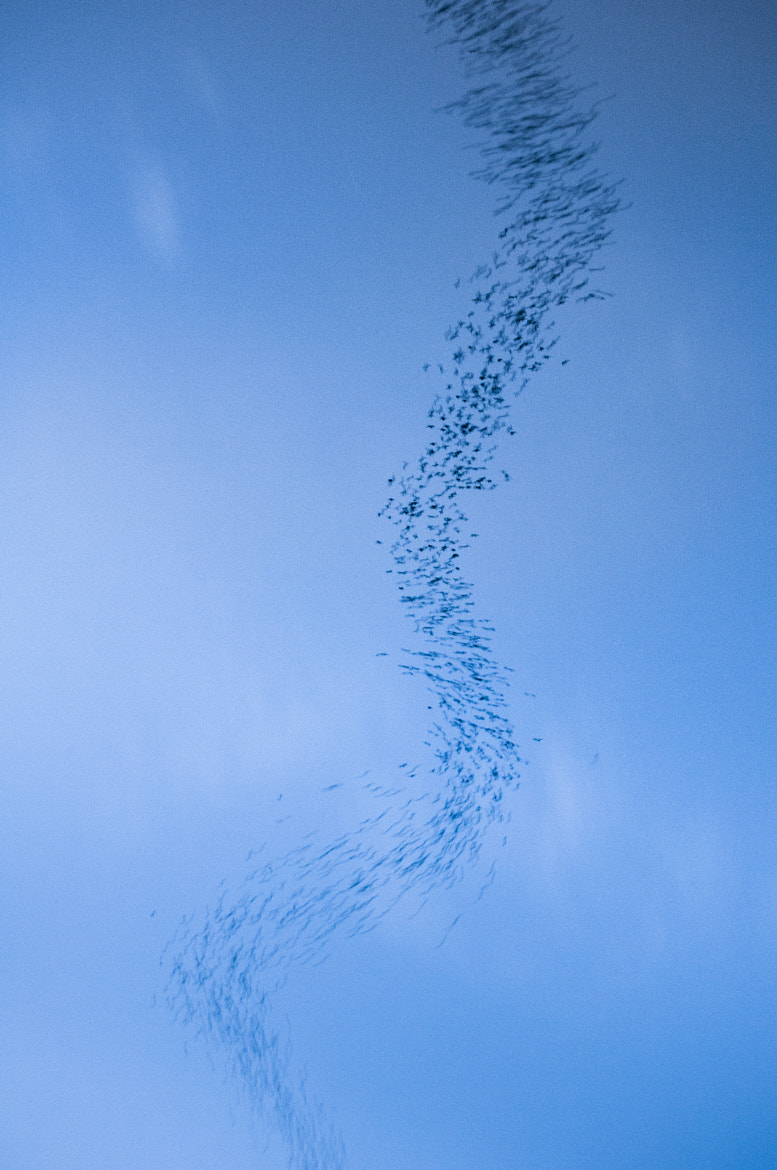 Photograph Bat Swarm by Sam Rowley on 500px