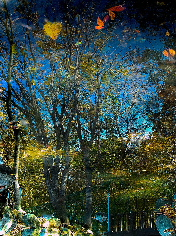 Photograph a luxuriant  forest by Jeong-Keun Kim on 500px