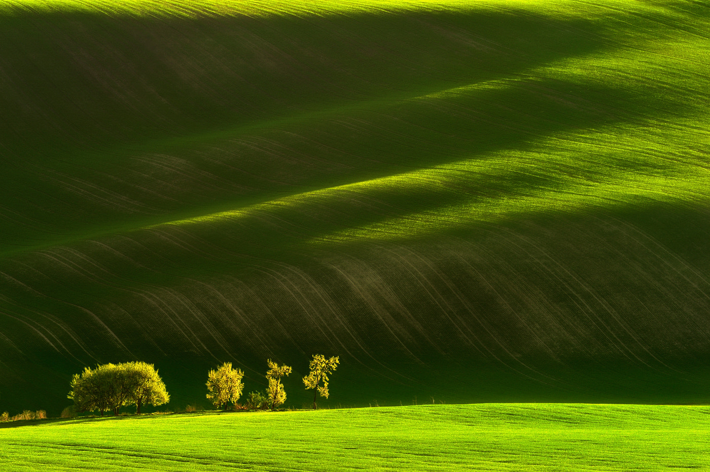 Photograph Field greens... by Pawel Kucharski on 500px
