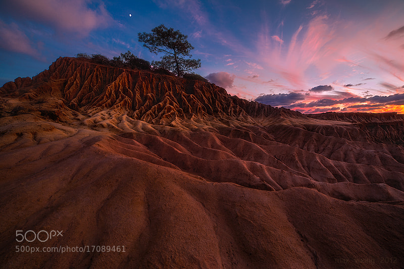 Photograph a midsummer night's dream (torrey pines, san diego) by Max Vuong on 500px