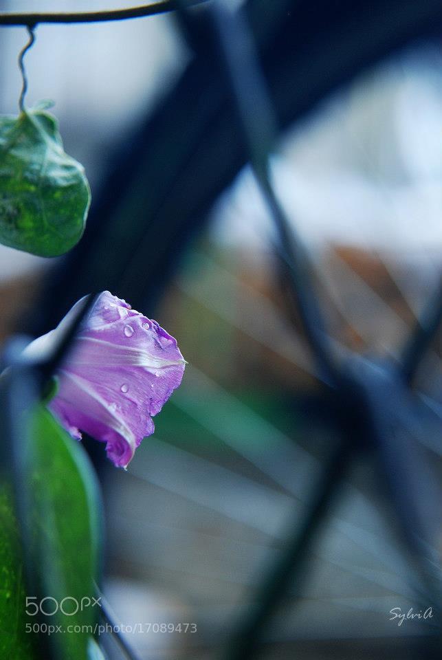 Photograph Untitled by Sylvia Asenova on 500px