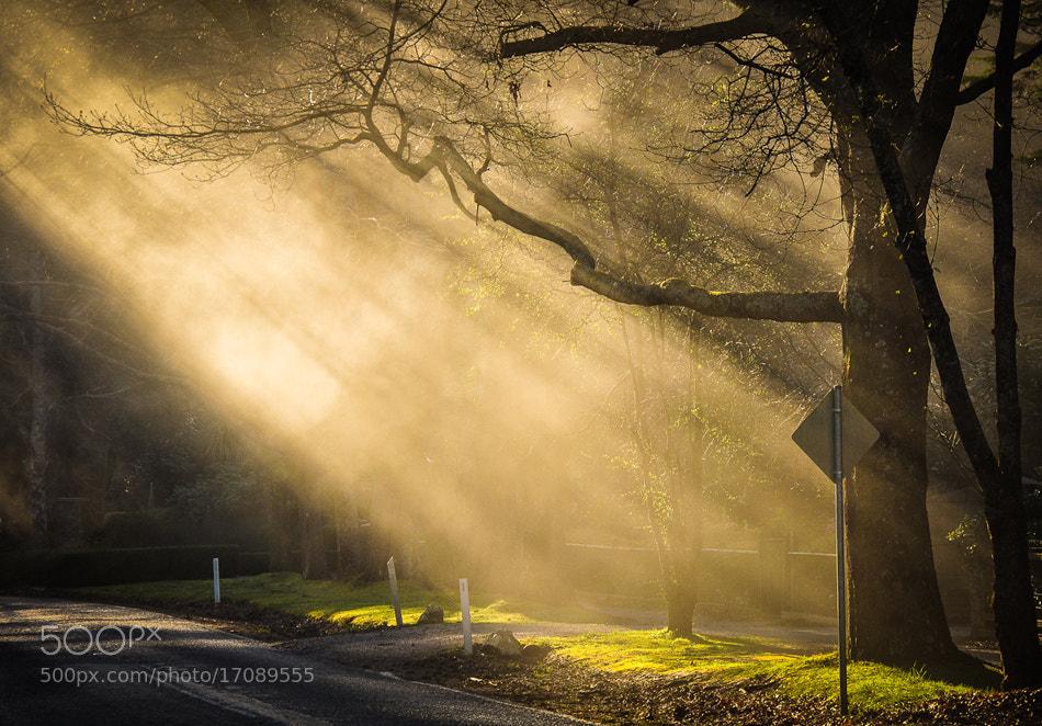 Photograph Heaven Sent by Joshua Tagicakibau on 500px