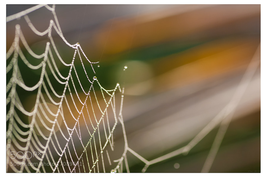 Photograph The Webs You Weave by Joshua Tagicakibau on 500px