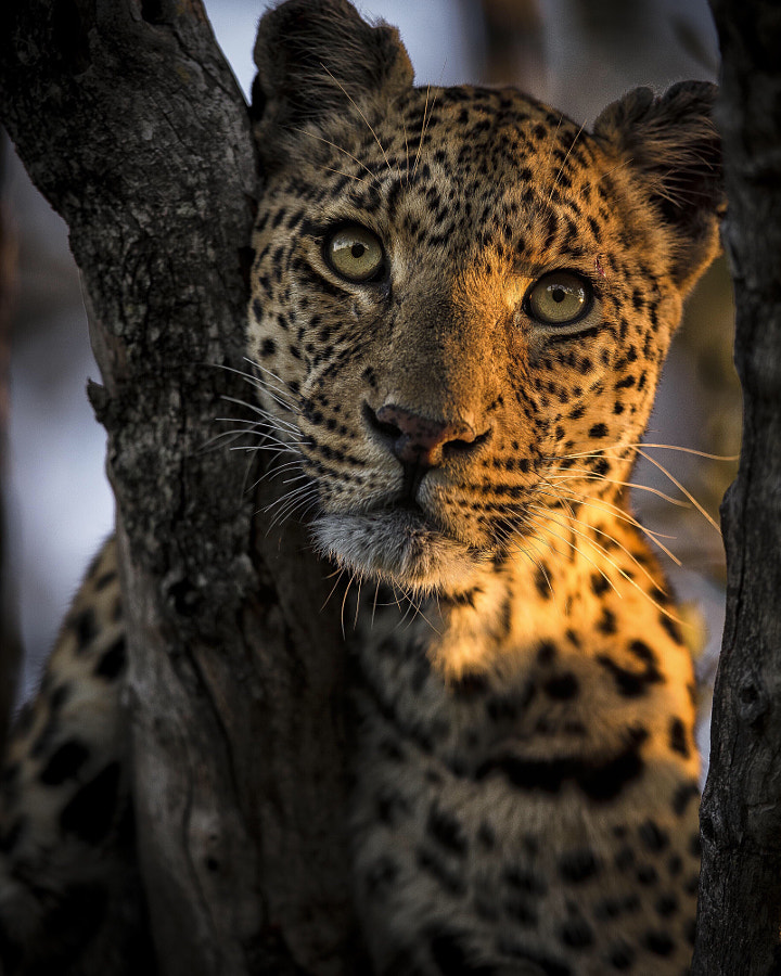 Beauty by Chris Fischer on 500px.com
