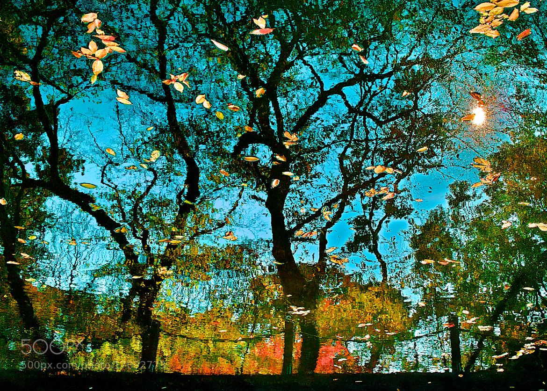 Photograph Autumn Painting by Jeong-Keun Kim on 500px