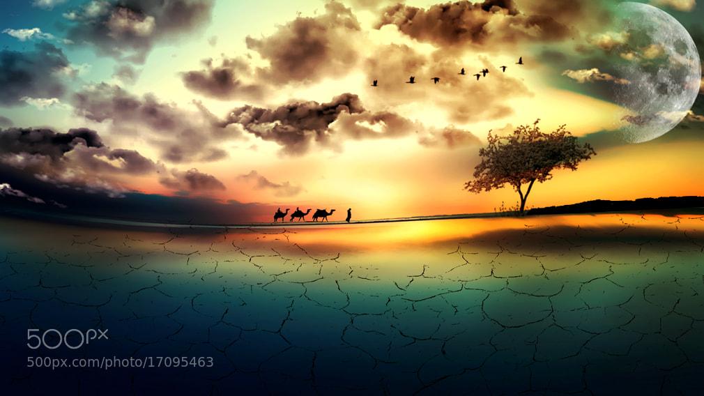 Photograph Camel Convoy by Rezvan Irani on 500px