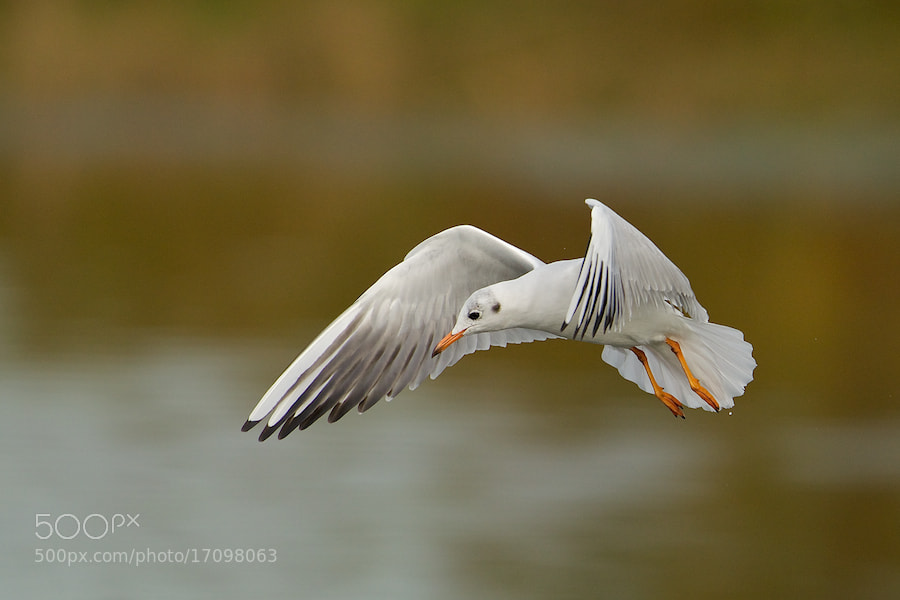 Photograph Looking for fish by Erik Veldkamp on 500px