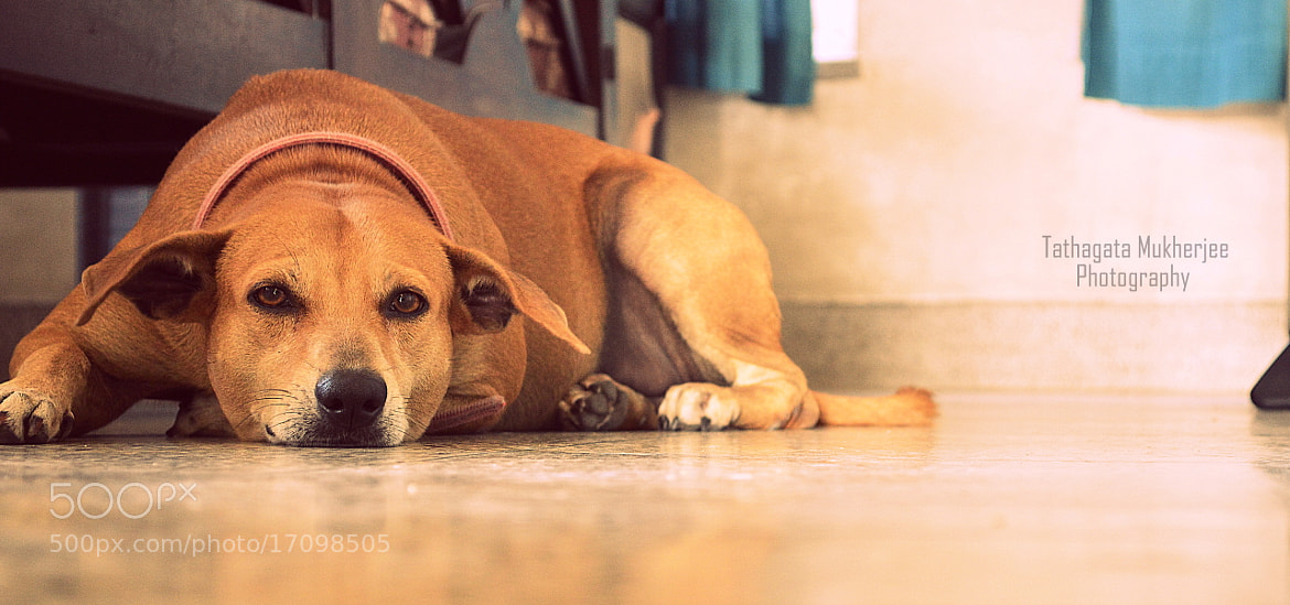 Photograph The Dog by Tathagata Mukherjee on 500px