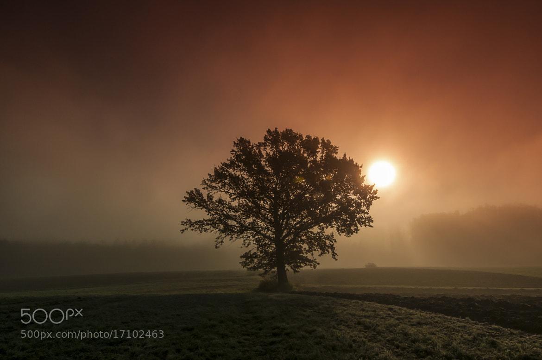 Photograph Eiche im Nebel by Leo Pöcksteiner on 500px