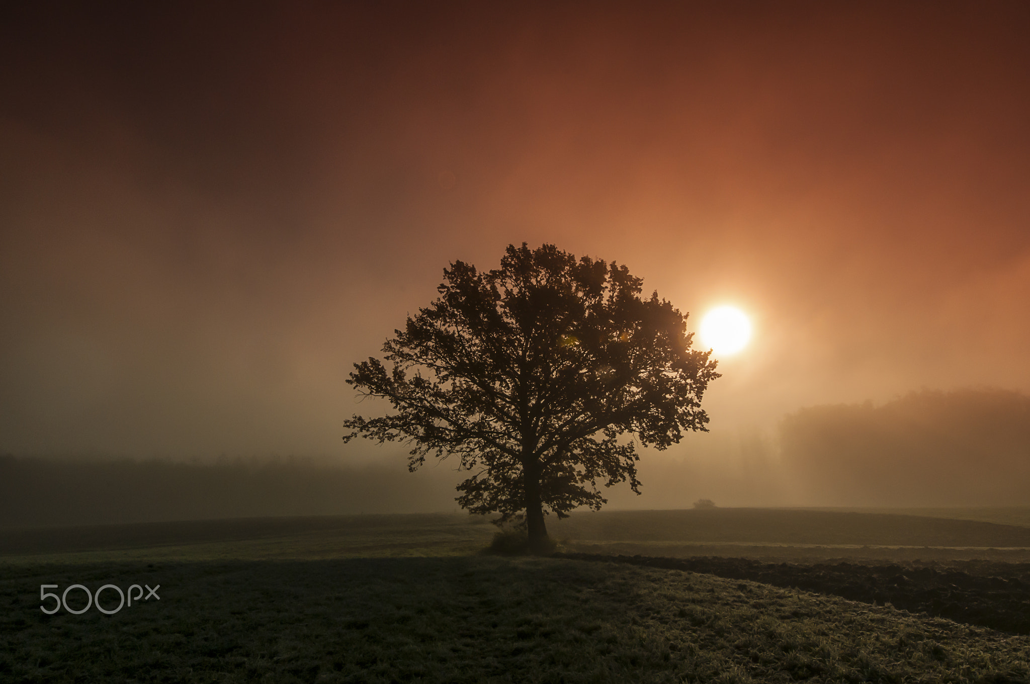 Photograph Eiche im Nebel by Leo Pöcksteiner on 500px