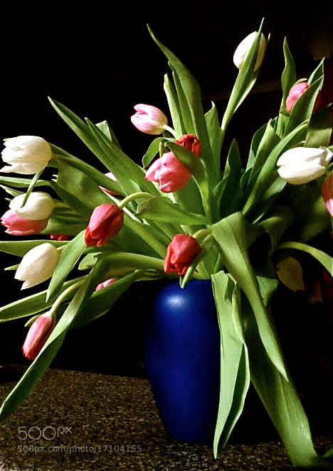 Photograph Love those tulips by Ann Weis on 500px