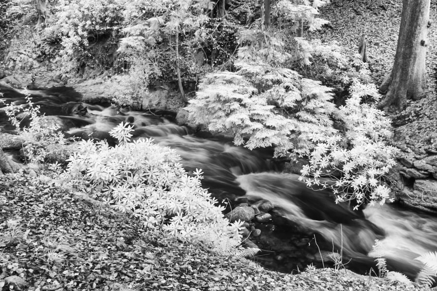 Stream at Rydal Hall