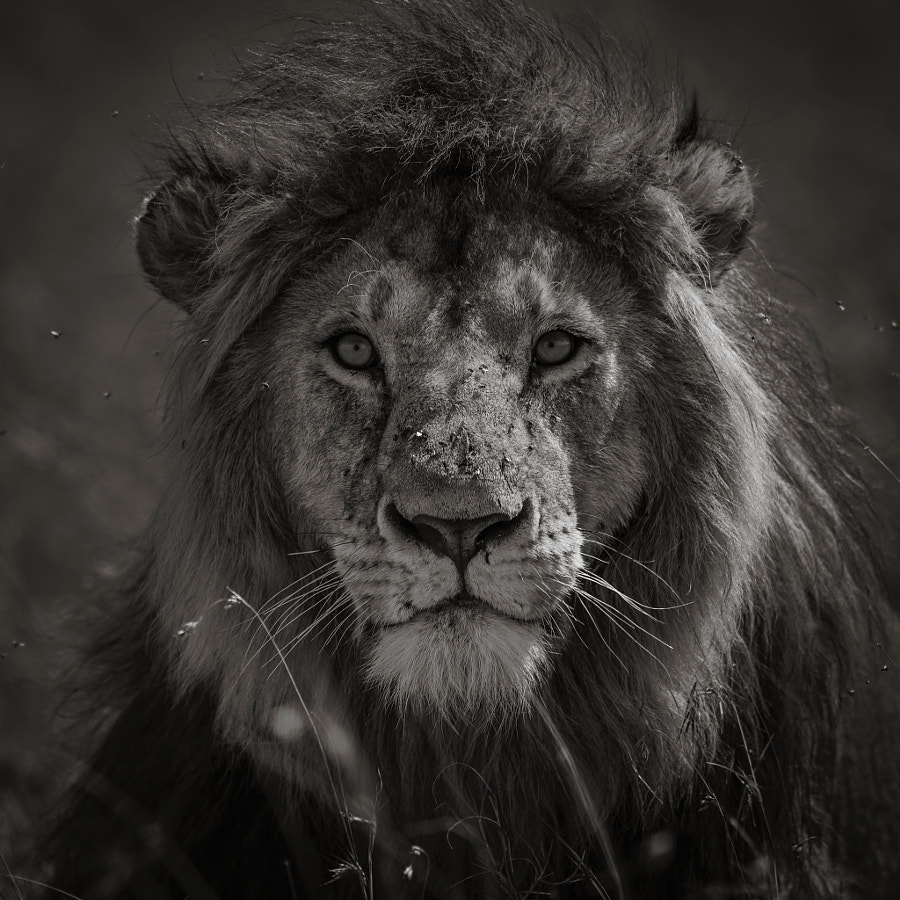 Moment by Chris Fischer on 500px.com