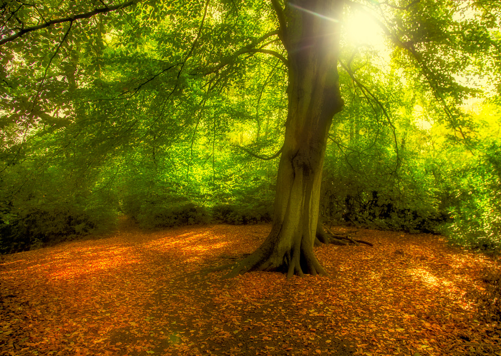 Photograph Autumn dream by Penny Myles on 500px