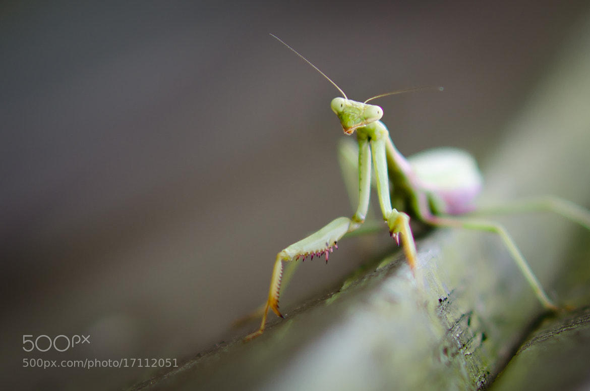 Photograph Colorful Mantis by Bailey Wheeler on 500px