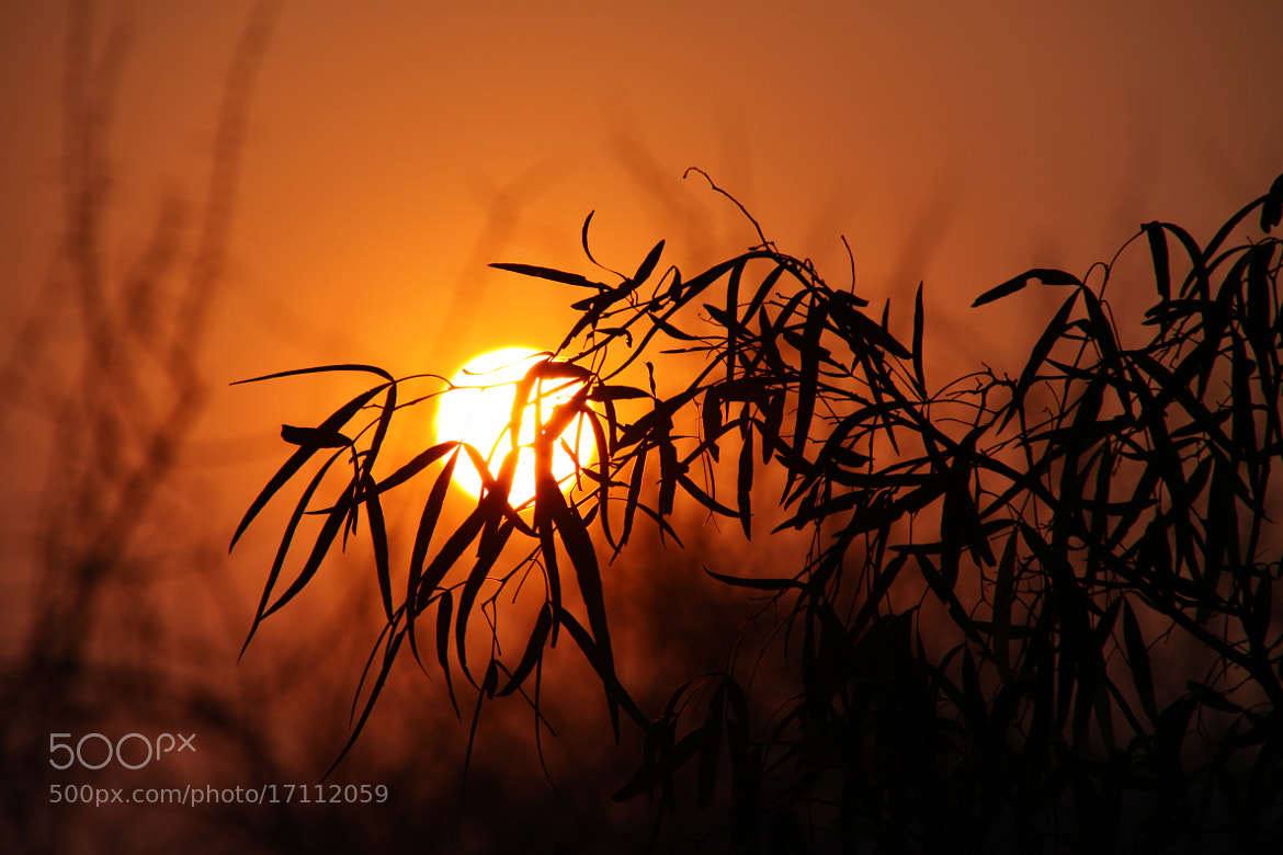 Photograph African Sun by Christian Wagner on 500px
