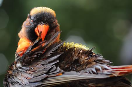 Parrot, Smiling Parrot, Bird,
