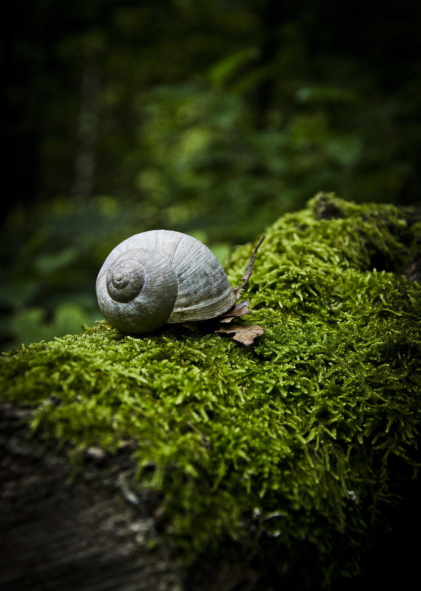 Photograph Snail by Peter Emil Andersen on 500px