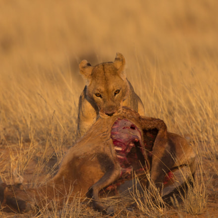 End of Hunt, Canon EOS 5D MARK III, Canon EF 400mm f/4 DO IS