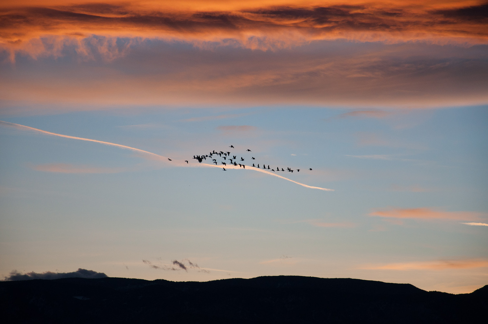 Photograph Sunset Flight by Katie Mobley on 500px