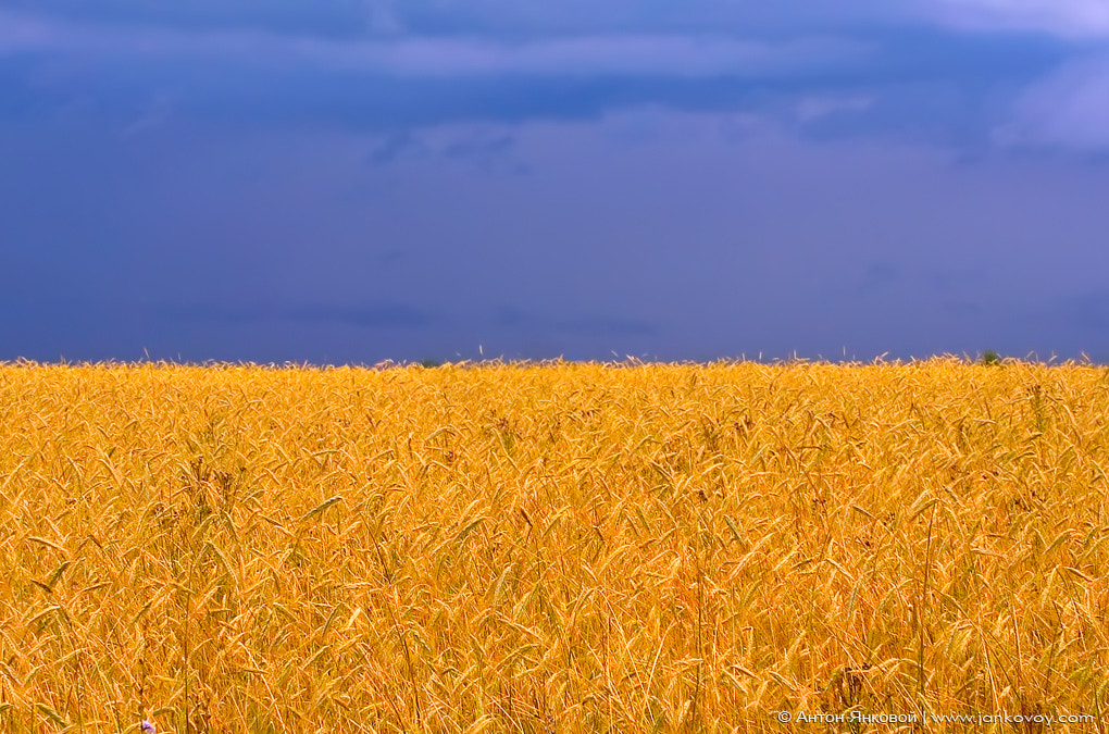 Photograph Ukraine Independence Day!!! (24 August) by Anton Jankovoy on 500px