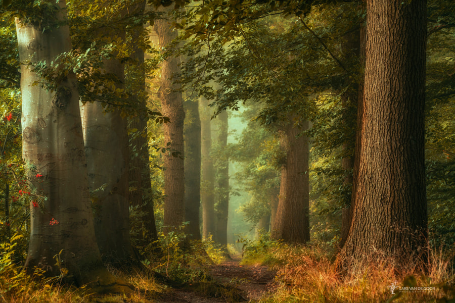 fairy forestry by Lars van de Goor on 500px.com