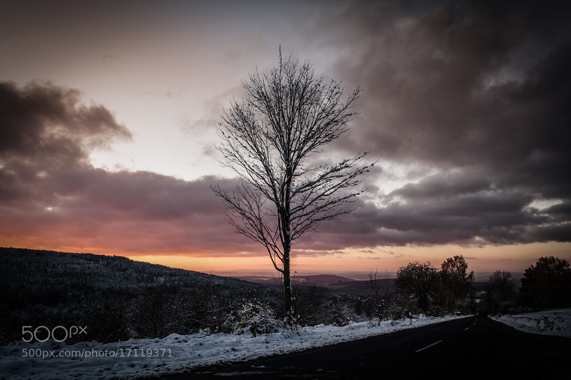 Photograph Tree in the sunset by Florian Klum on 500px