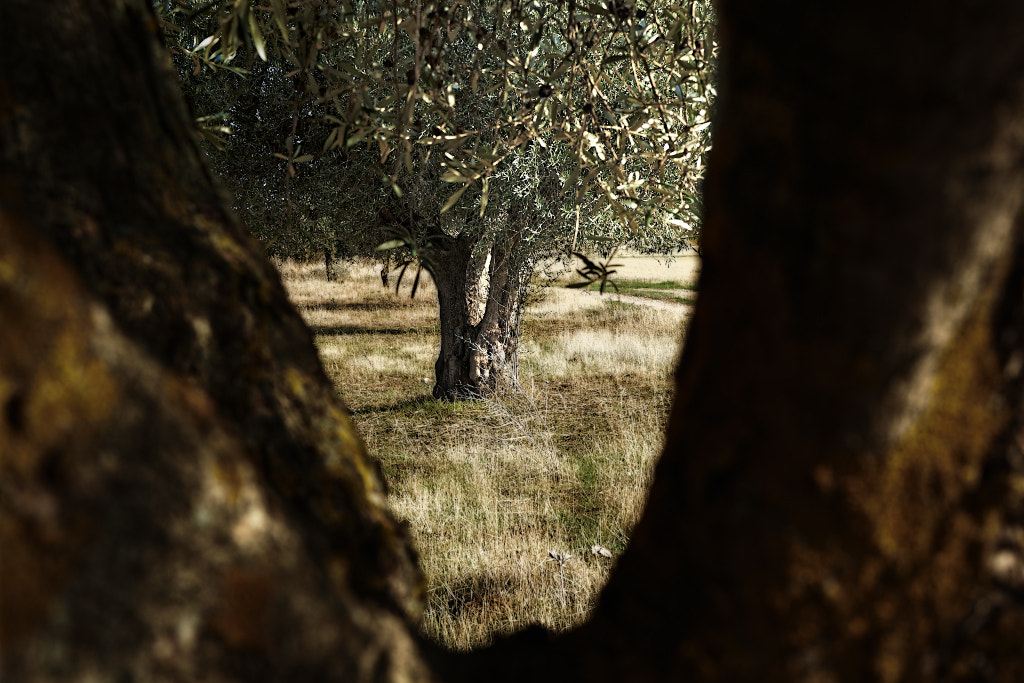 Photograph The olive by Carlos Quiza on 500px