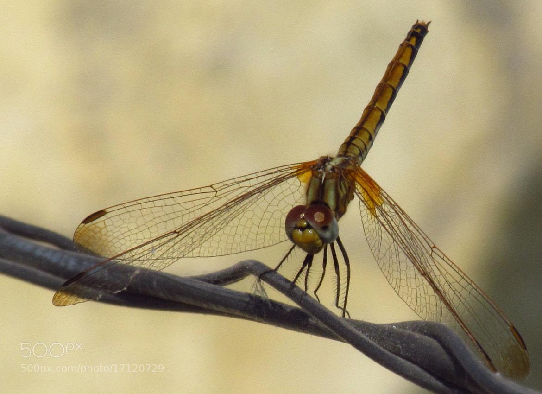 Photograph *%* by Bimalendu Shankar on 500px