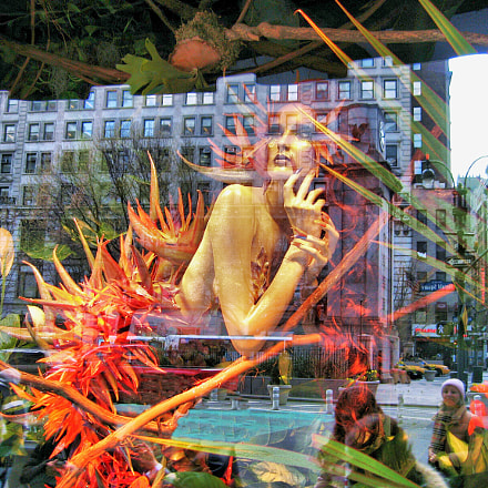 Window Display Reflections, Canon POWERSHOT SD550
