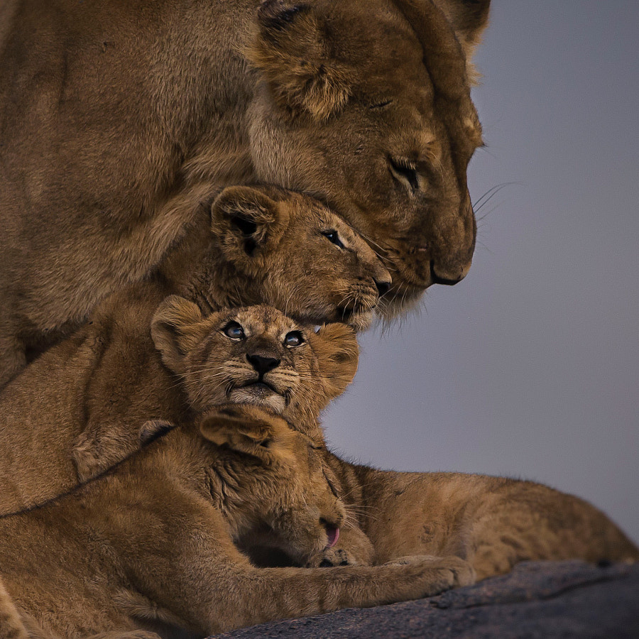 Mother and Cubs by Chris Fischer on 500px.com