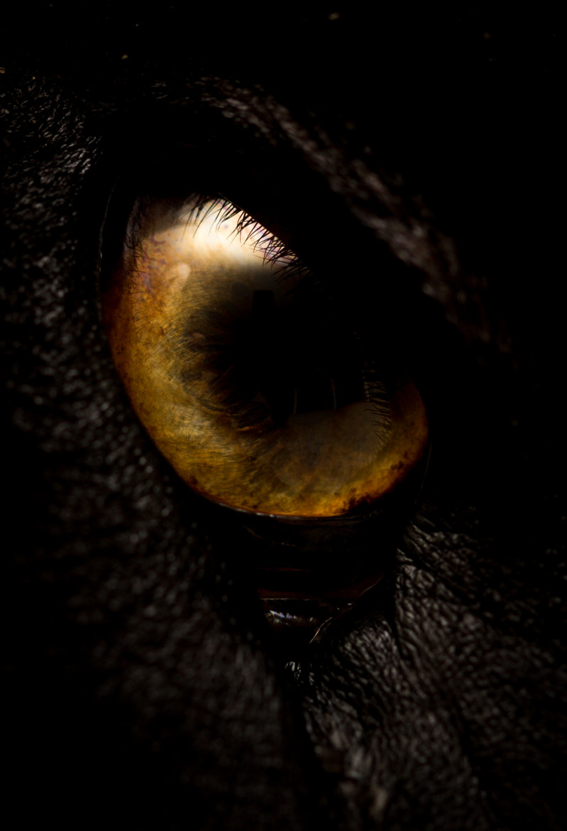 Photograph Eye of the Dragon by Andre Recnik on 500px