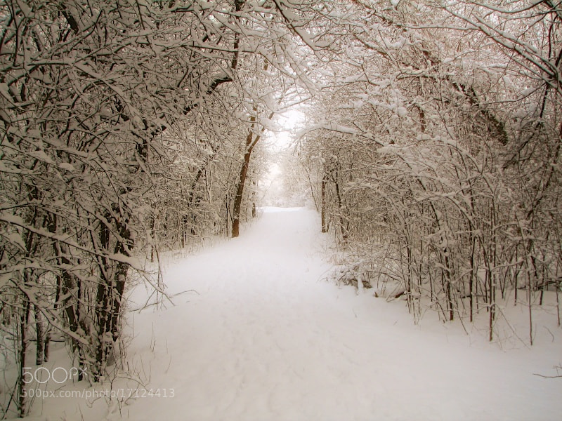 Photograph Winter walk by Lance Lemke on 500px
